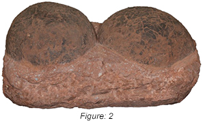 Figure: 2, This company offers various levels of counterfeit Hadrosaur eggs that vary in price and appearance
