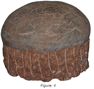 Figure: 4, This company offers various levels of counterfeit Hadrosaur eggs that vary in price and appearance