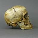 Roman Gladiator Skull Stolen from Tucson Gem and Mineral World