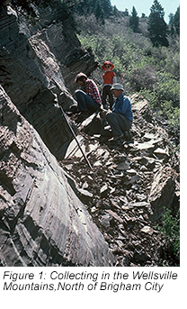 Figure 1: Collecting in the Wellsville Mountains, North of Brigham City